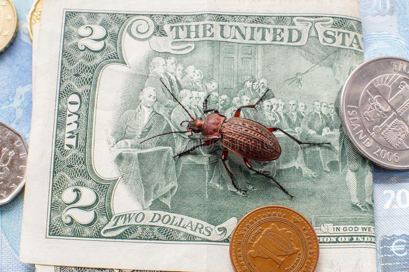 Ground beetle on the bill of the two-dollar bill next to small coins of Bosnia and Herzogovina, Iceland, Europe royalty free stock images