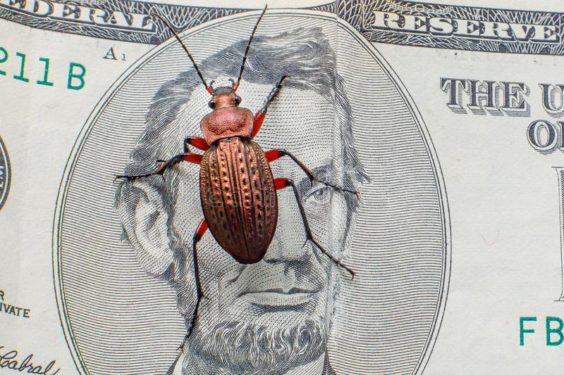 Ground beetle on a five-dollar bill. Money beetle stock images