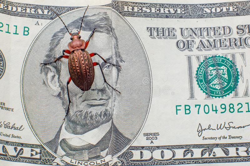Bug on bucks. Ground beetle on a five-dollar bill. Money beetle royalty free stock photos
