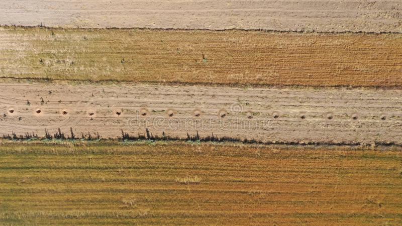Ground belt, almond crop holes between cereals in view of drone royalty free stock photo