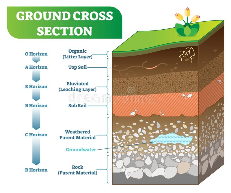 Ground Cross Section vector illustration with organic, topsoil, subsoil and other horizon levels. stock illustration