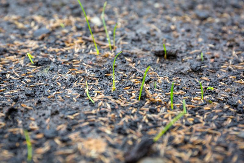 Ground with grass seeds planted for the perfect lawn stock images