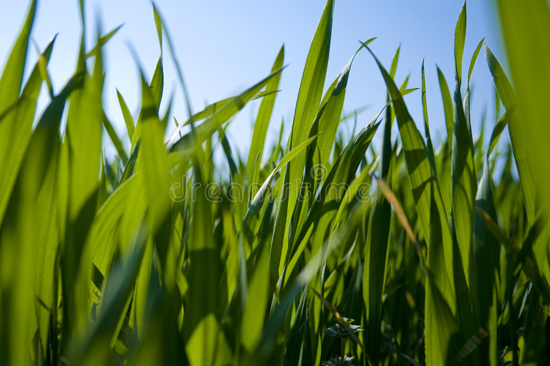 Download Ground-level view of grass stock photo. Image of nature - 2293562