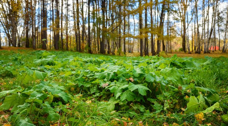 Ground Level View of Green Plants and Fall Forest at Sunny Day, Shallow Depth of Field. Ground Level View of Green Plants and Fall Forest at Sunny Day in stock image