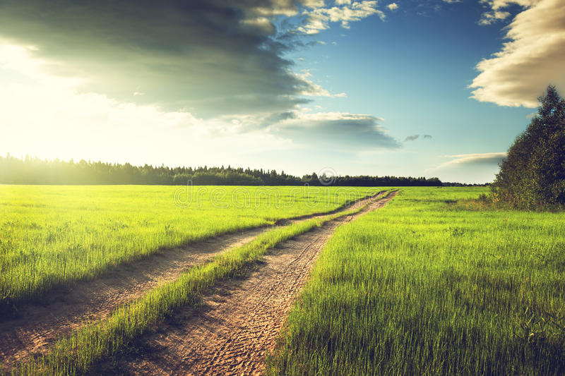 Ground road and field of spring grass stock image