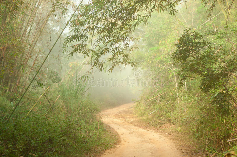 Download Ground road in jungle stock image. Image of mist, bright - 24118755