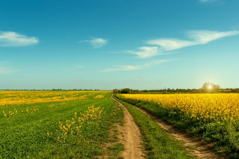 Ground road runs along blooming field.Beautiful summer landscape stock photography