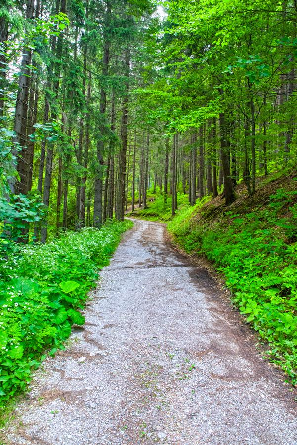 Ground road in summer mountain forest royalty free stock images
