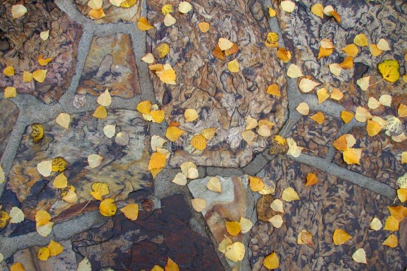 Ground Shot 3 Free Public Domain Cc0 Image