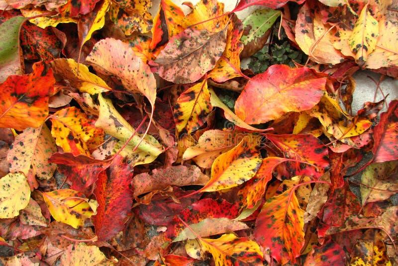 Ground Shot 2 Free Public Domain Cc0 Image