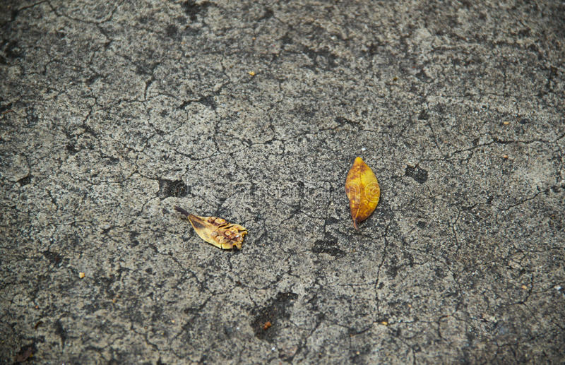Download Ground texture with leafs stock image. Image of flat - 27429129