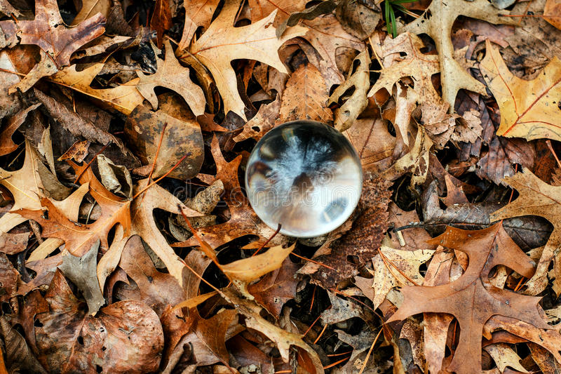 From the Ground Up. Overhead closeup of a bunch of dry fall leaves on the ground with a glass ball in the center reflecting the bare trees above where the leaves stock images