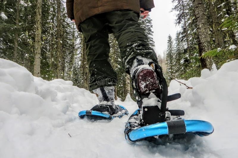 A ground view and closeup of the legs and feet of a person wearing nice snowshoes as they walk with the beautiful winter landscape. And snow covered forests of stock images