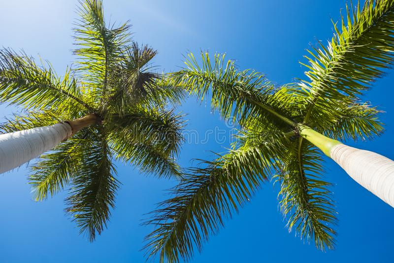Ground view of palmtree in the blue sky clear background - tropical and summer holiday vacation concept with beautiful nature tree stock photography