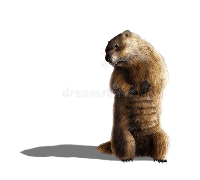 groundhog ilustração do vetor