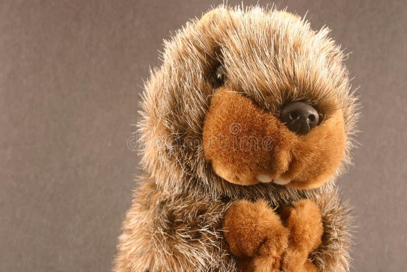 Groundhog stock afbeeldingen