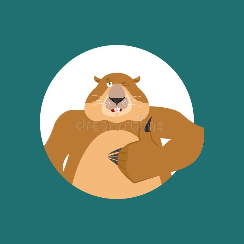 Groundhog mrugnięcia i aprobaty Woodchuck szczęśliwy emoji groundhog royalty ilustracja