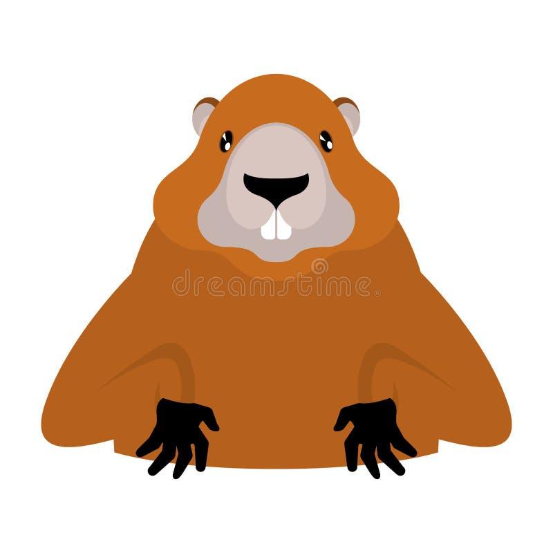 Groundhog-Murmeltierporträt lokalisiert Wilder Nagetierkopf illustrati lizenzfreie abbildung