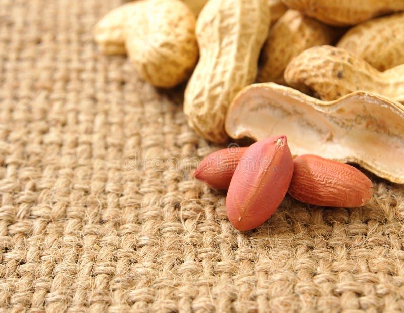 Groundnut. On the sack background ,close up stock image