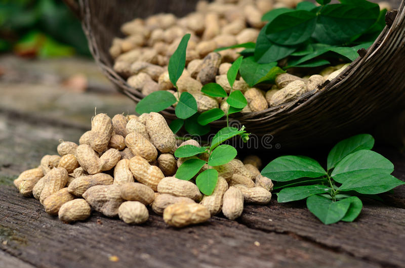 Groundnuts. Close up of groundnuts on wood table royalty free stock photo
