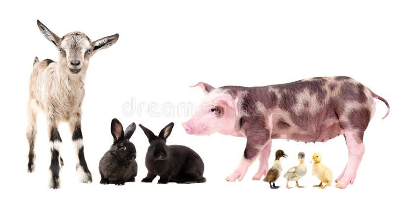 Group of adorable farm animals stock photos