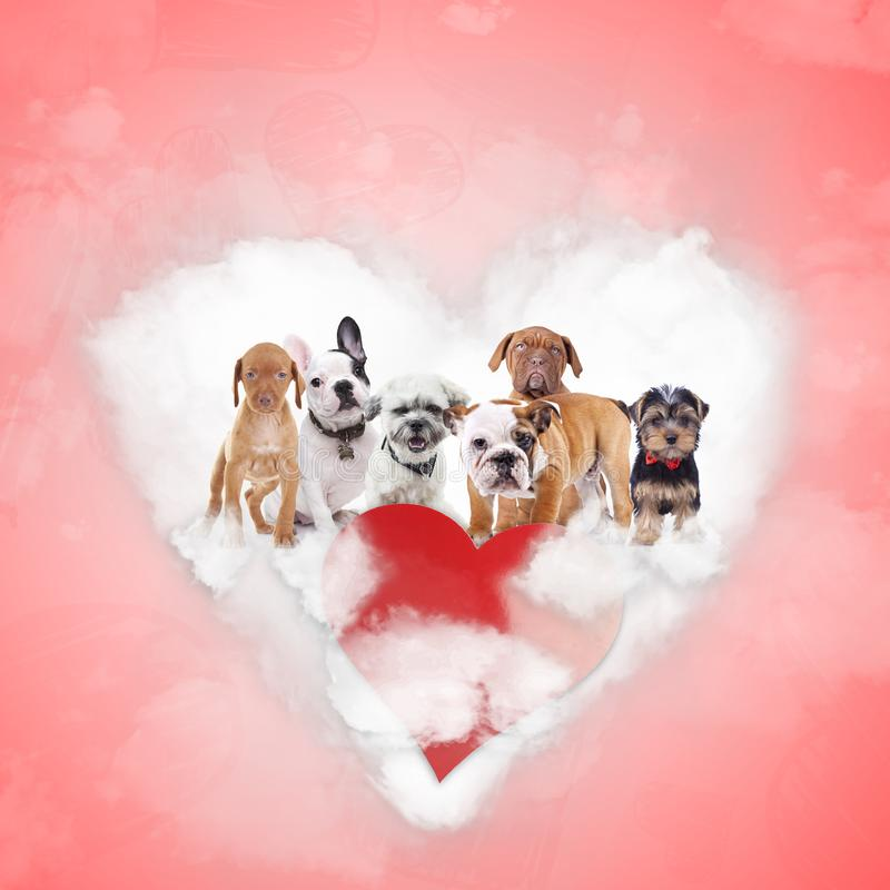 Group of adorable puppies celebrating valentine`s day stock image