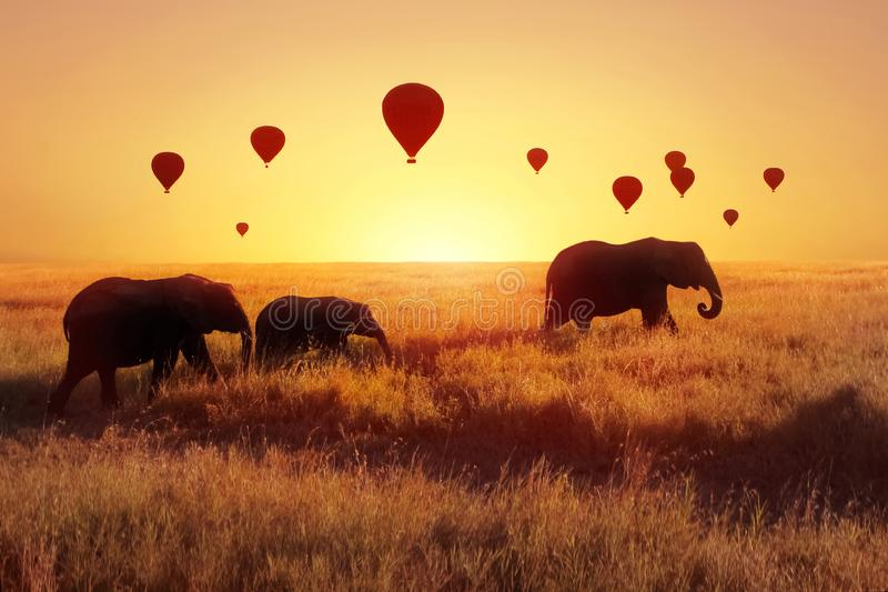 A group of African elephants against the sky with balloons at sunset. African fantastic image. Africa, Tanzania, Serengeti Nationa stock photo