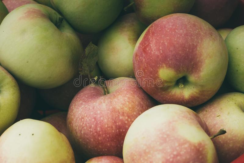 Group of apples. Fresh tasty ripe apples in the garden close up background royalty free stock photo