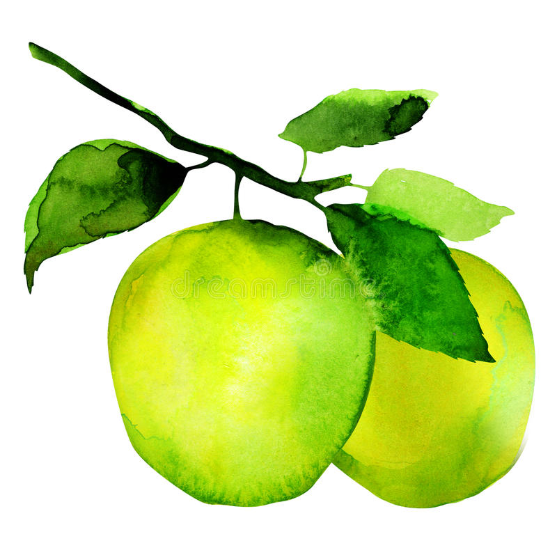 Group of apples royalty free illustration