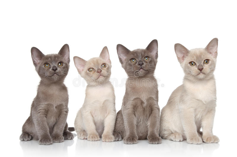 Group of baby animals stock images