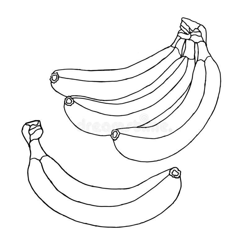 Group of beautiful bananas isolated on a white background. Illustration for coloring book. Fruit doodle royalty free stock photos