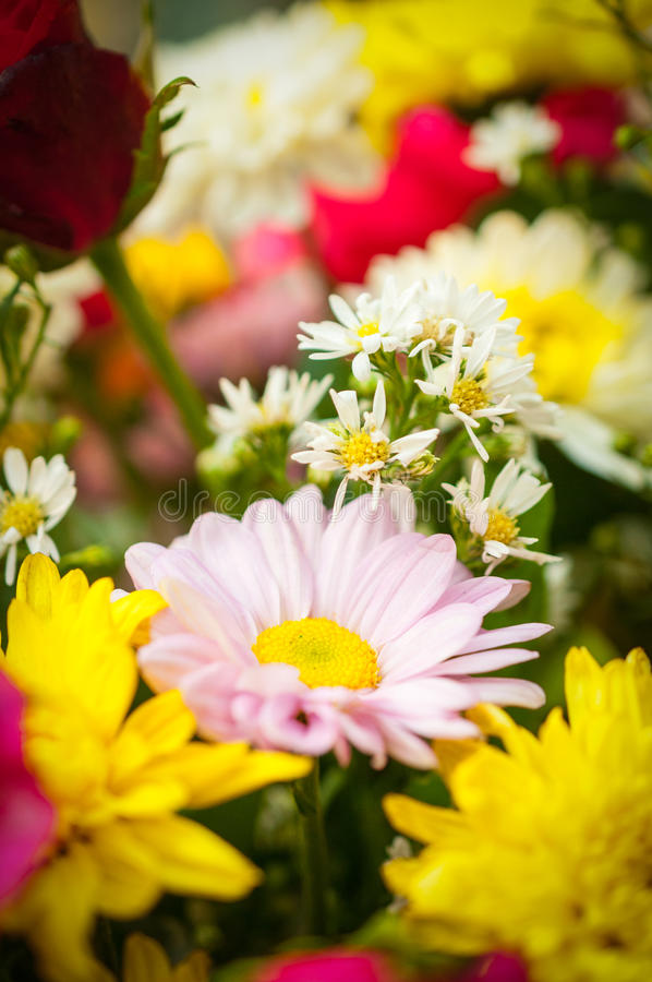 Group beautiful flower royalty free stock photography