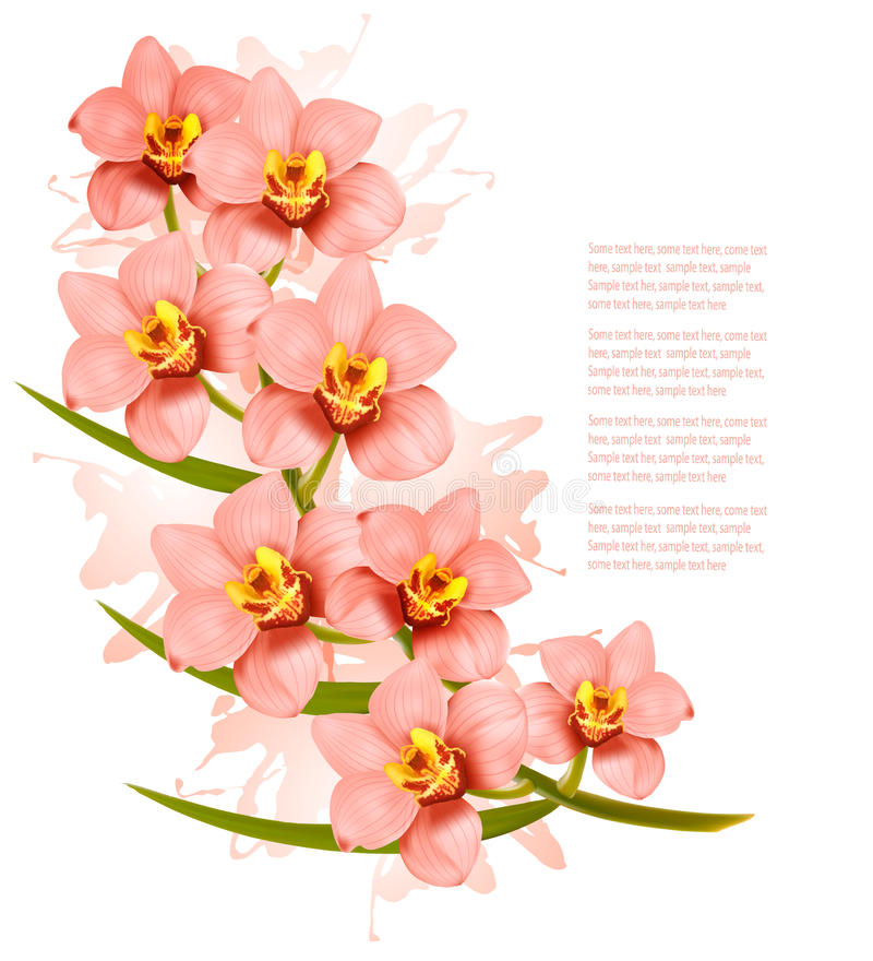 Group of beautiful pink orchid flowers. royalty free illustration