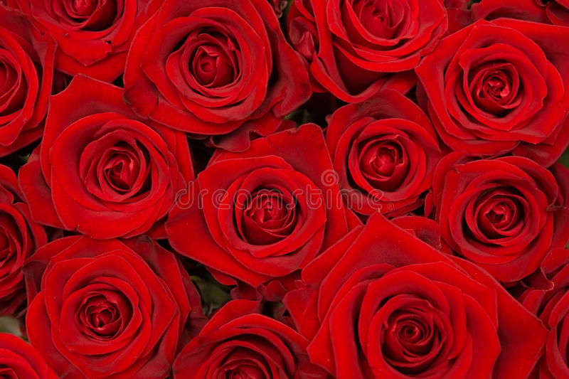 Download Group Of Beautiful Red Roses Stock Photos - Image: 33704913