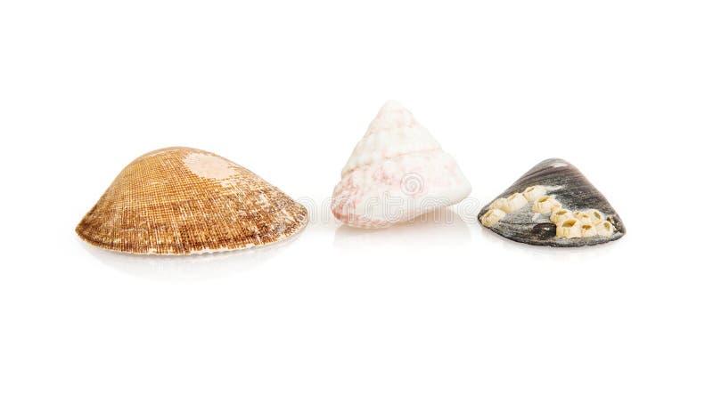 Group of beautiful sea shells royalty free stock photo