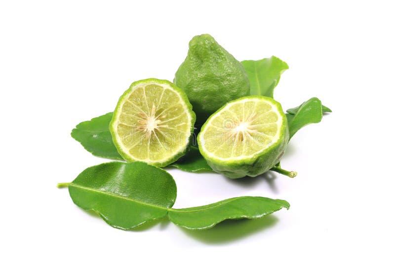 Group of bergamot stock images