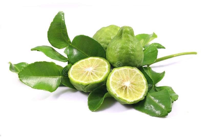 Group of bergamot and leaf stock photography