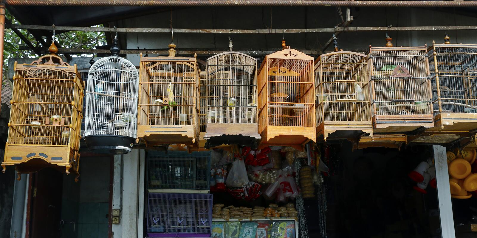 Group of bird in cage stock photos
