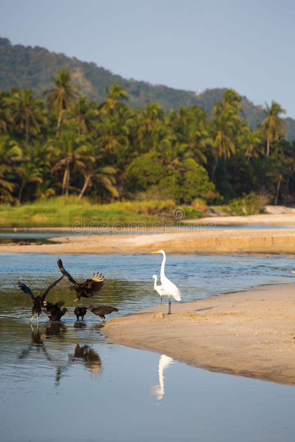 Download Group Of Birds On Beach Of Palomino Stock Image - Image: 39644229