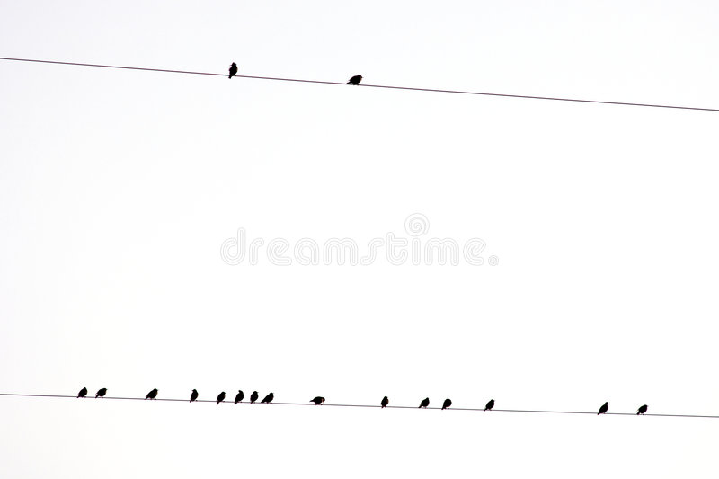 Download Group Of Birds On A Electric Wire With White Sky Stock Photo - Image: 8483760