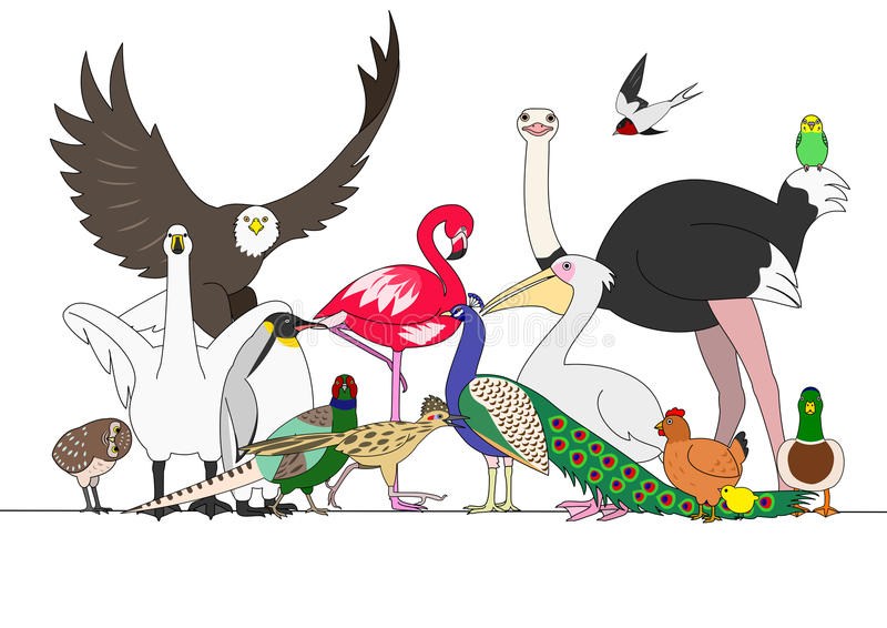 Group of birds. Group of various hand drawn birds vector illustration