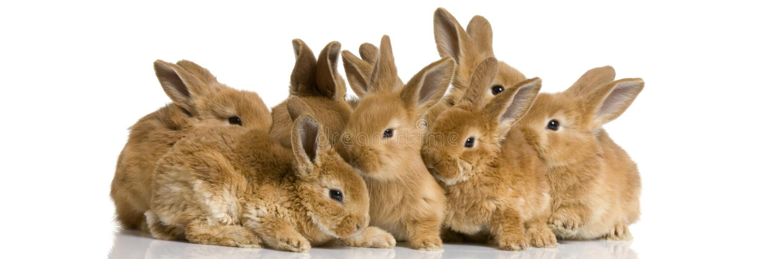 Group of bunnies stock photography