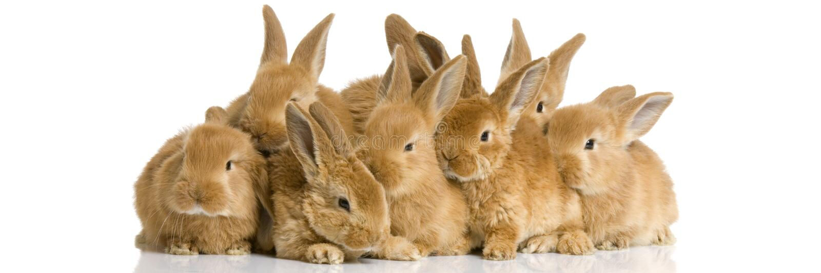 Group of bunnies stock image