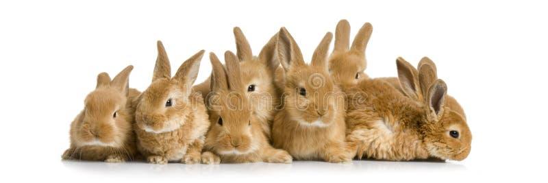 Group of bunnies stock photos