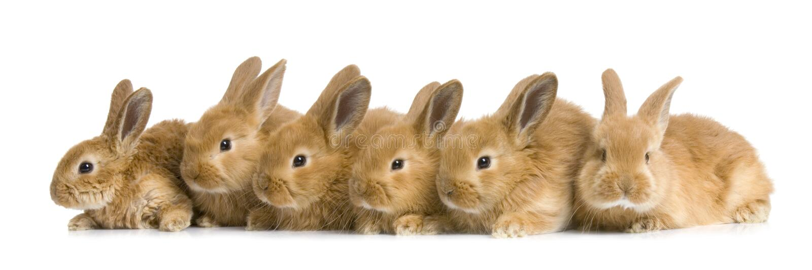 Group of bunnies royalty free stock image