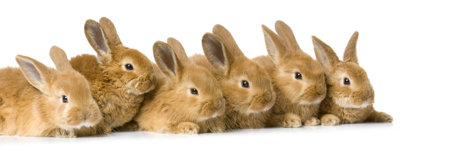 Group of bunnies royalty free stock photography