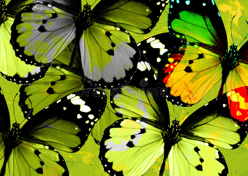 Group of butterflies stock image