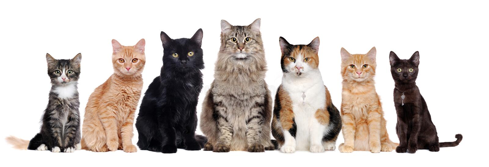 A group of cats of different breeds sitting in a raw royalty free stock image