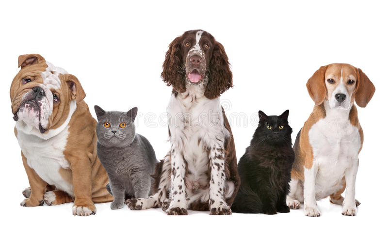 Group of cats and dogs. In front of white background royalty free stock image