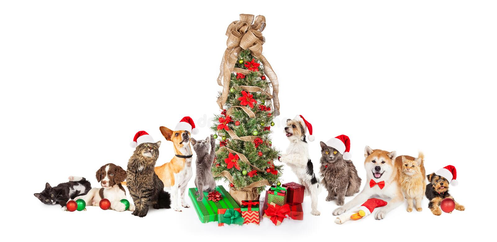 Group of Cats and Dogs Around Christmas Tree. Collection of cats and dogs in a row together around a Christmas tree with gifts royalty free stock images